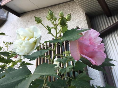 f:id:miyako2226:20181004101211j:plain
