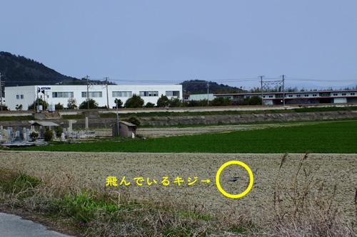 f:id:miyako2226:20190330000300j:plain