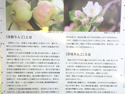 f:id:miyako2226:20190804231439j:plain