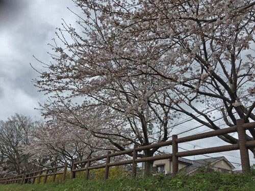 f:id:miyako2226:20200401162908j:plain