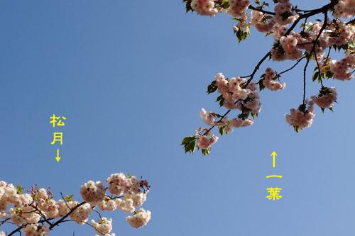 f:id:miyako2226:20200427221921j:plain