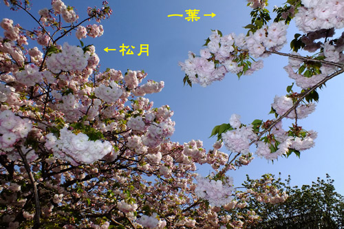 f:id:miyako2226:20200427221944j:plain