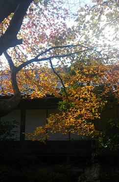 f:id:miyakogu:20161125235954j:plain