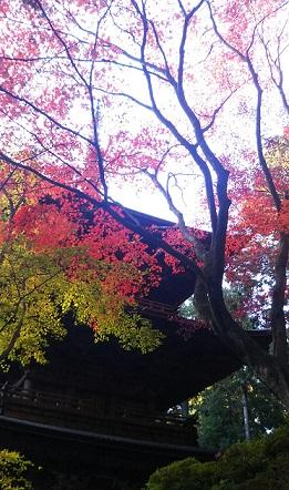 f:id:miyakogu:20161126005956j:plain