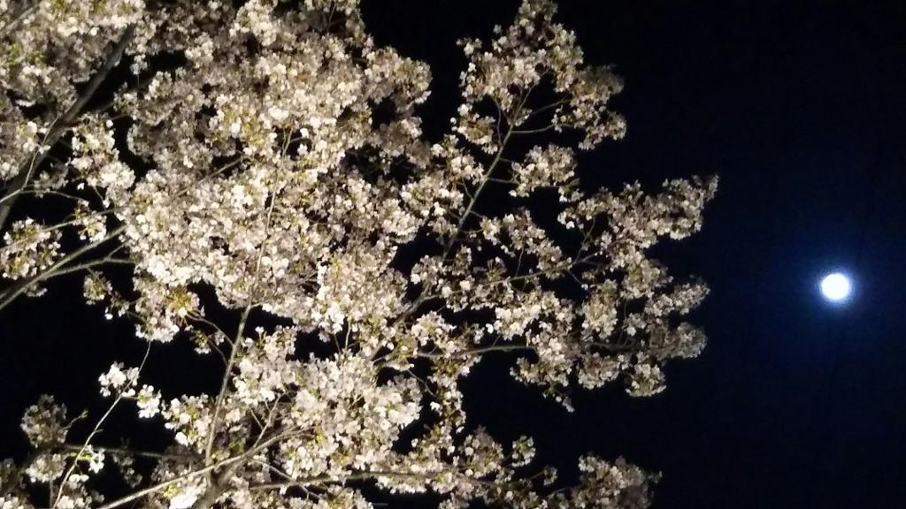 f:id:miyakogu:20180330222200j:plain
