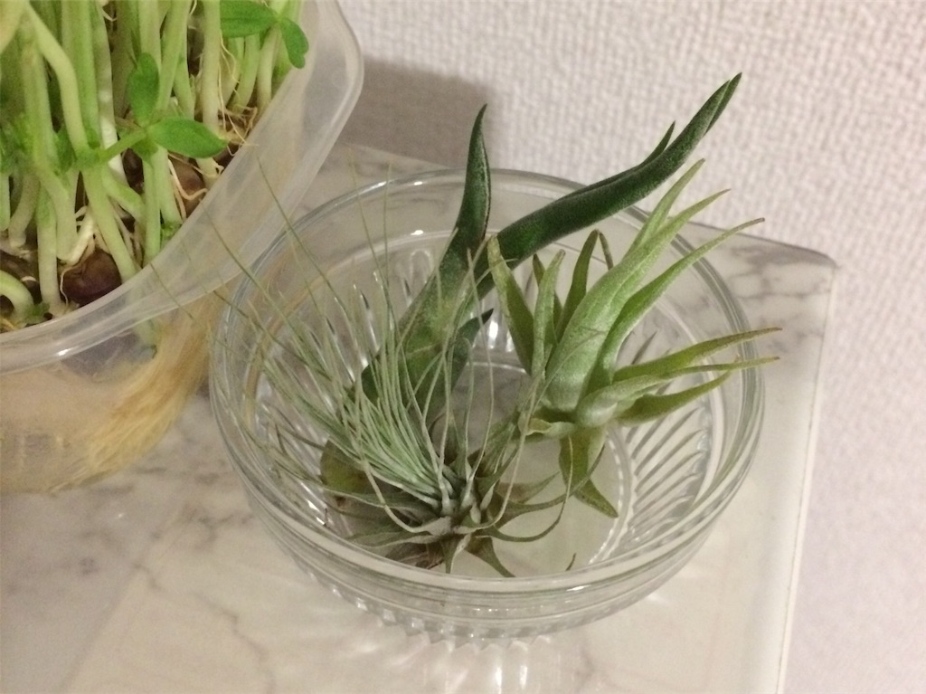 f:id:miyakokara:20180619003754j:image