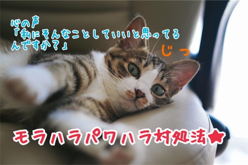 f:id:miyakokara:20180806192349j:image