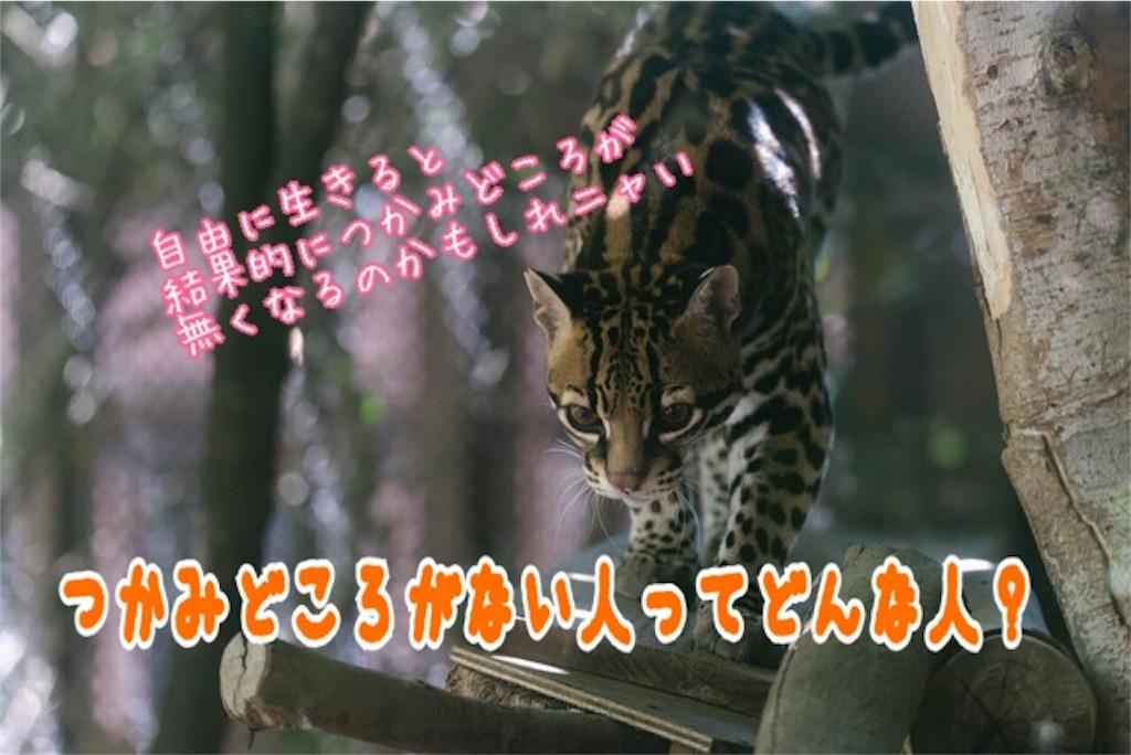 f:id:miyakokara:20180806214640j:image