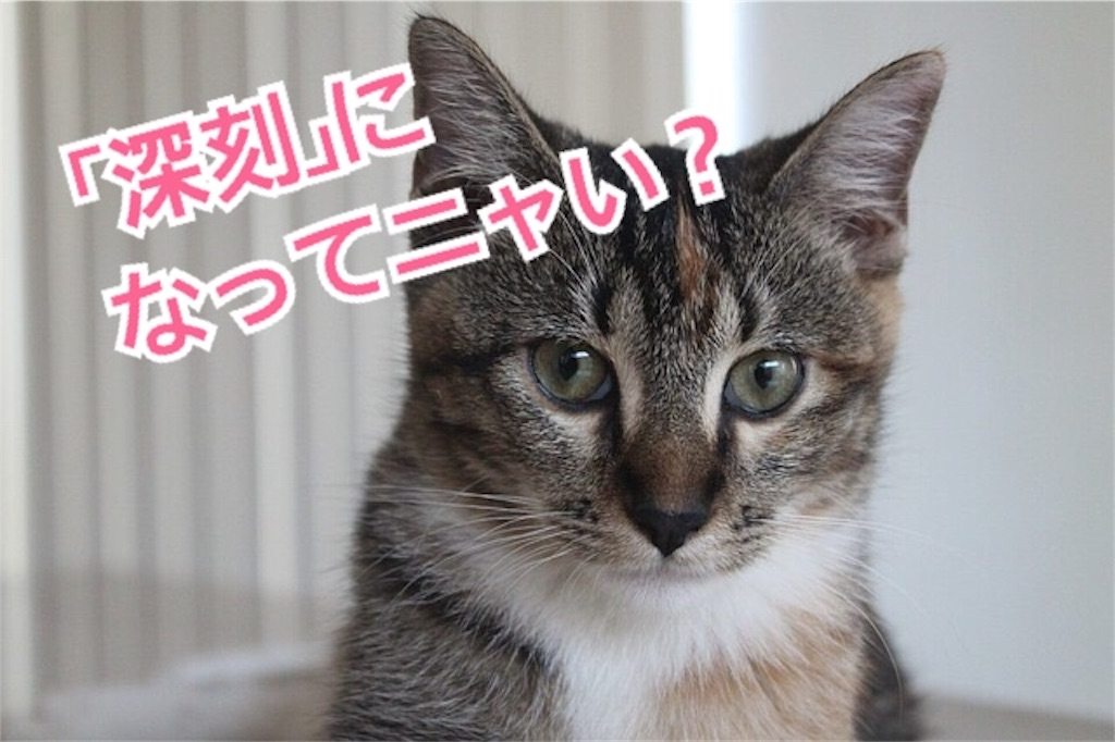 f:id:miyakokara:20190119153109j:image