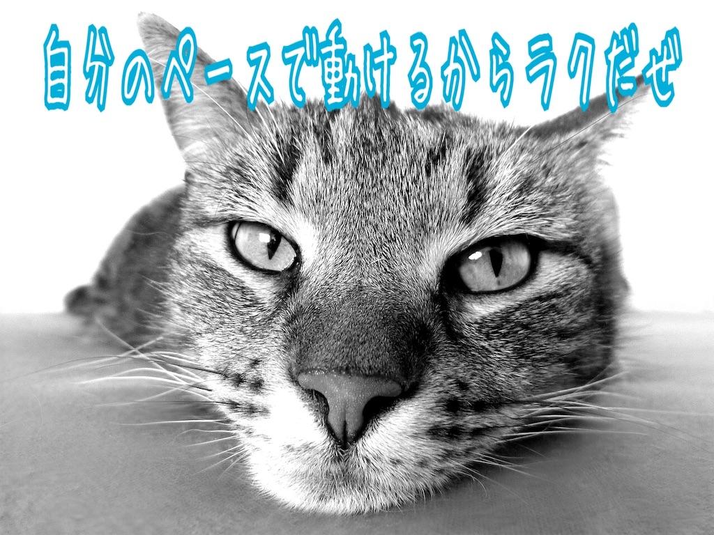 f:id:miyakokara:20190122124843j:image