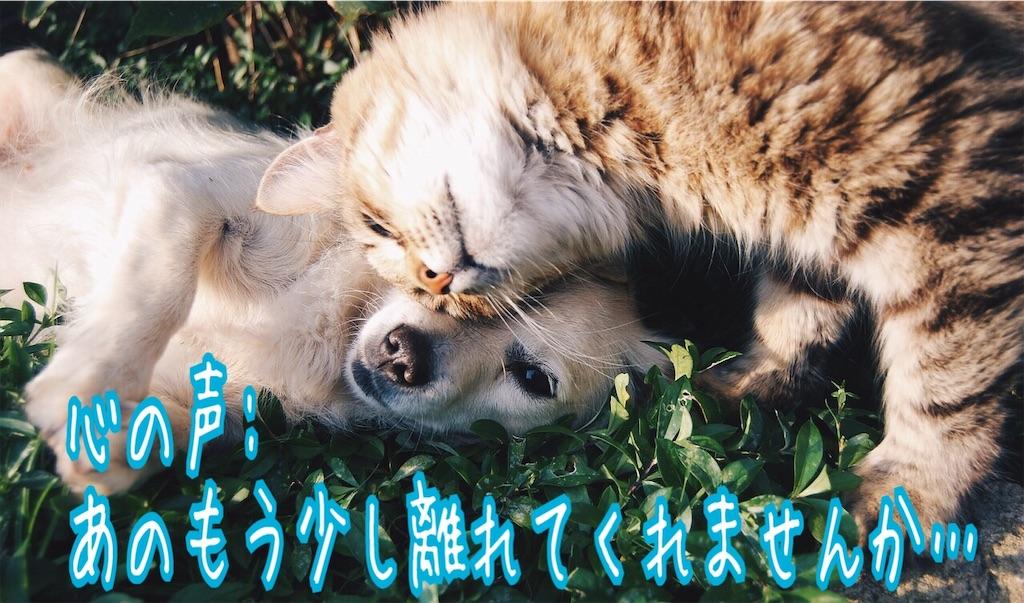 f:id:miyakokara:20190124165127j:image