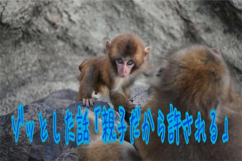 f:id:miyakokara:20190213231416j:image