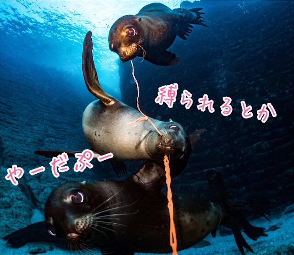 f:id:miyakokara:20190216183936j:image