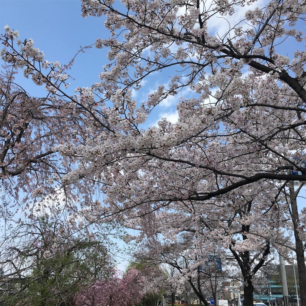 f:id:miyakokara:20190410151233j:image