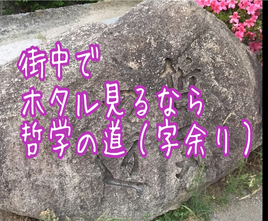 f:id:miyakokara:20190607075028j:image