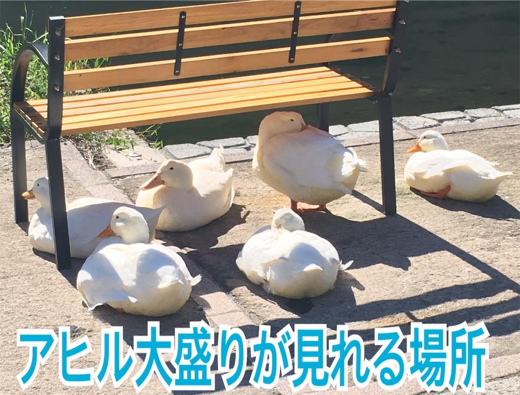 f:id:miyakokara:20191001201757j:image