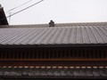 [鍾馗さん][京都]五番町