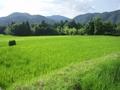 [京都]越畑