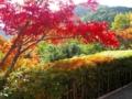 [京都]光悦寺