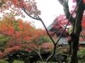 [京都]大徳寺 高桐院