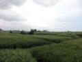 [旅][バリ島]ウブド