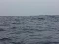 [旅][バリ島]ドルフィンクルーズ