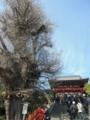 [旅]鎌倉 鶴岡八幡宮