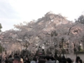 [京都][世界遺産]醍醐寺三宝院