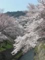 [滋賀][花]琵琶湖疏水と三井寺観音堂