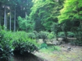 [京都][世界遺産]高山寺 茶園