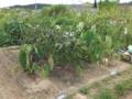 [農園]上仰木タナバタふれあい園