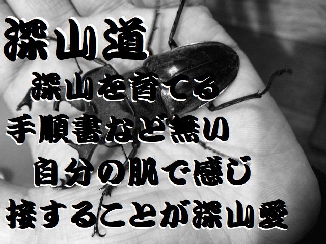 f:id:miyamaoyajikun:20210821212021p:plain