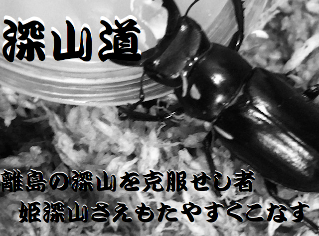 f:id:miyamaoyajikun:20210822124044p:plain