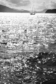 1983年7月 打瀬舟
