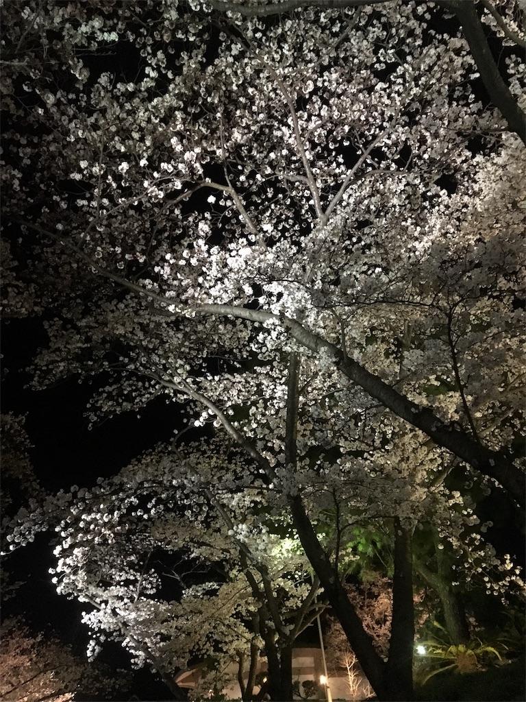 f:id:miyanotakashi:20180329063503j:image