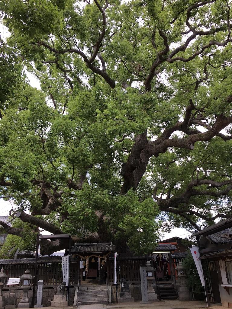 f:id:miyanotakashi:20190904112138j:image
