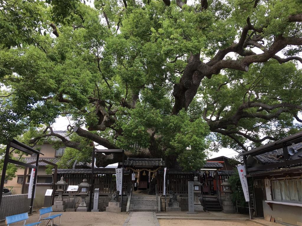 f:id:miyanotakashi:20190904112149j:image
