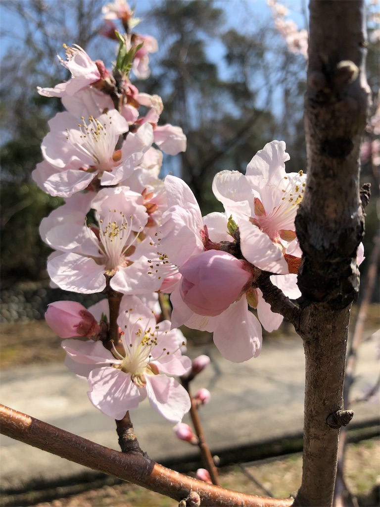 f:id:miyare-igosuki:20180327150805j:image