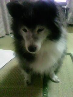 f:id:miyashima:20120116193409j:image:left