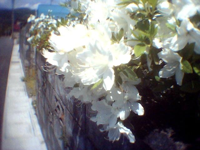 f:id:miyashima:20120526134028j:image:w360:left