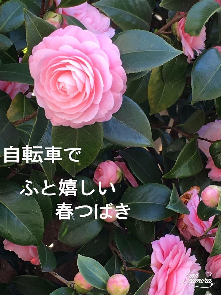 f:id:miyashita03nami08:20190401211027j:image