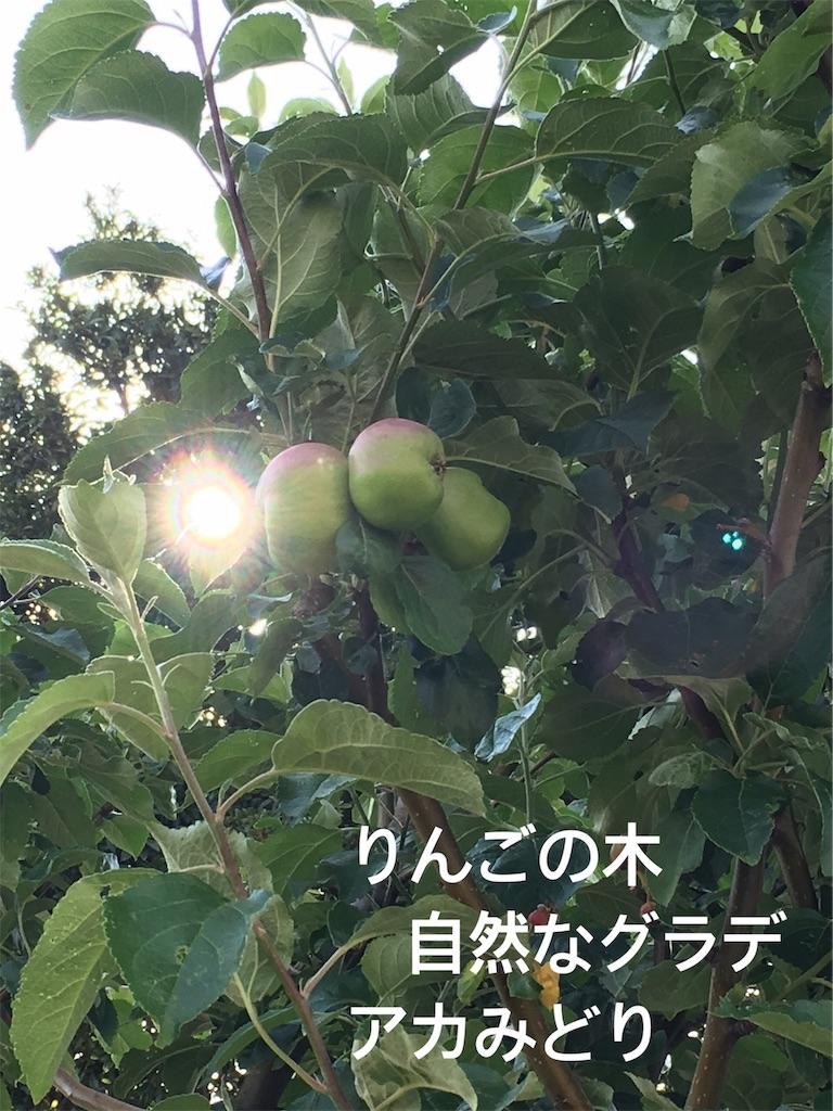 f:id:miyashita03nami08:20190522214153j:image