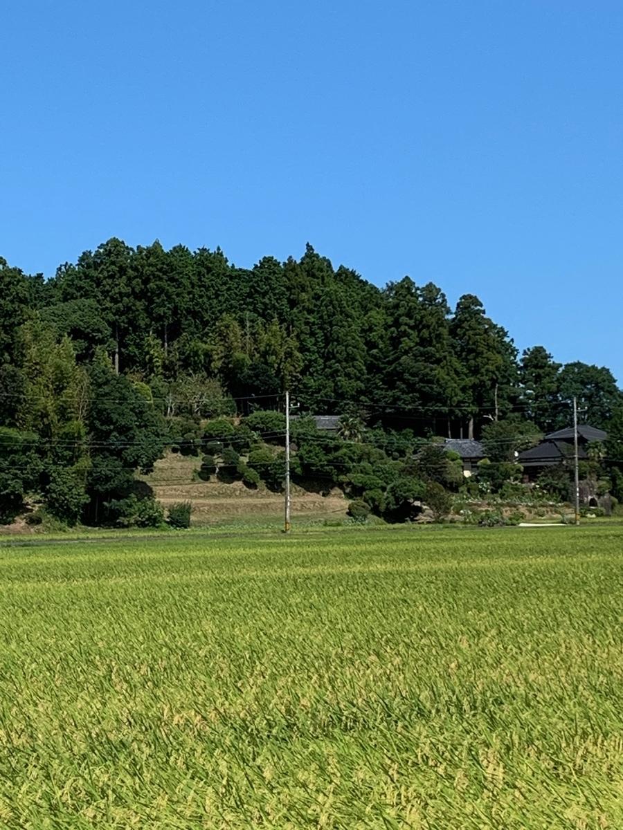 f:id:miyauchi135:20200831175745j:plain