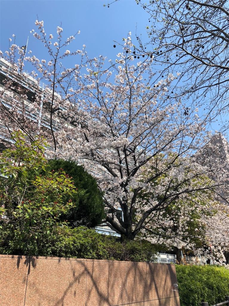 f:id:miyazono-9ran:20190404213511j:image