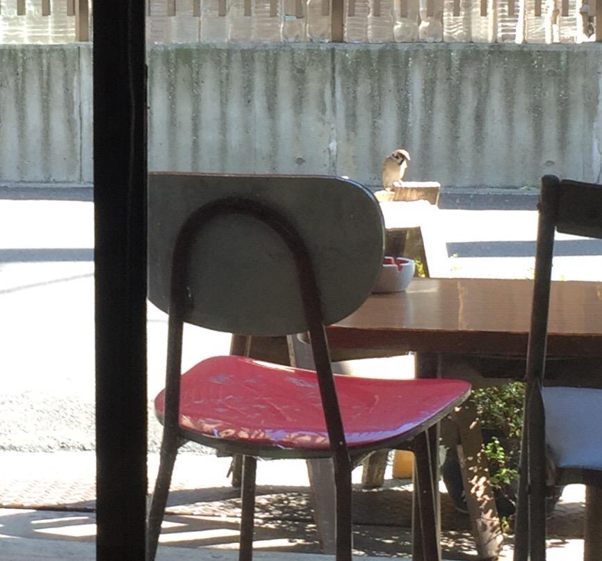 外に置かれた看板の上に雀が一羽とまっている