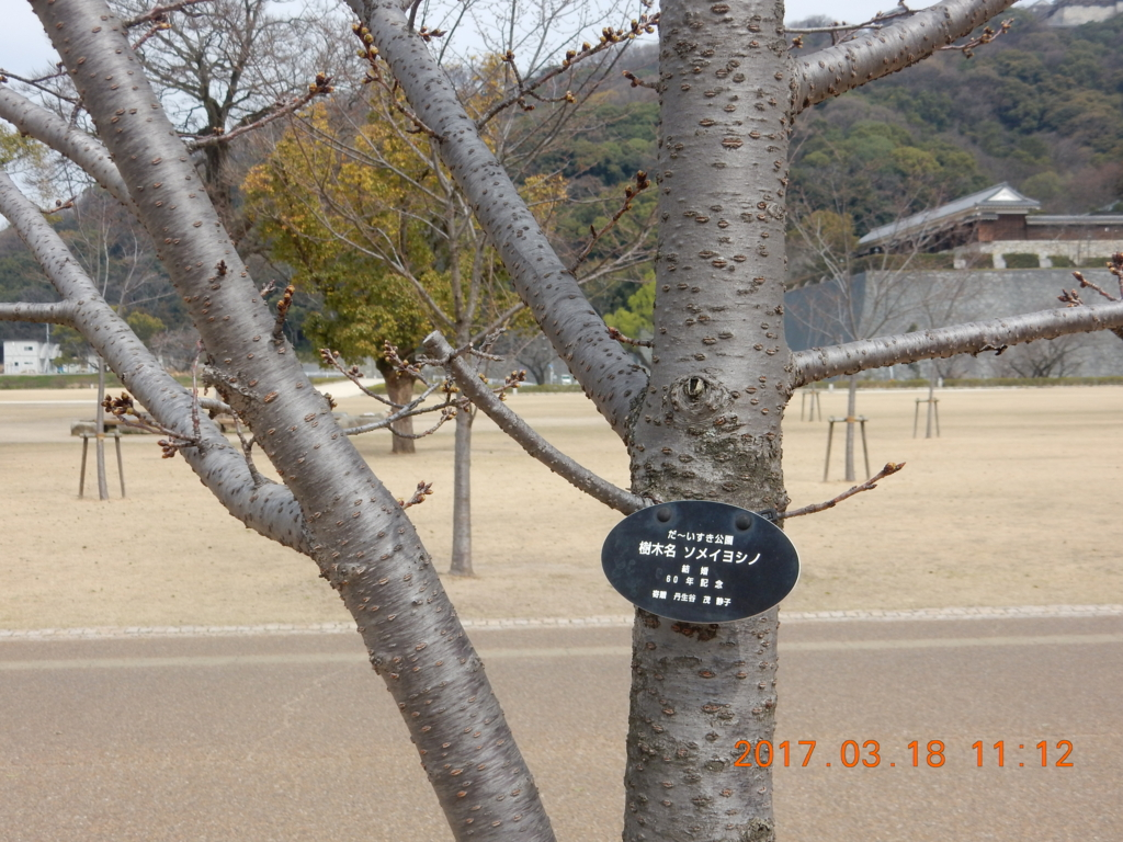 f:id:miyoshi_s:20170318111216j:plain