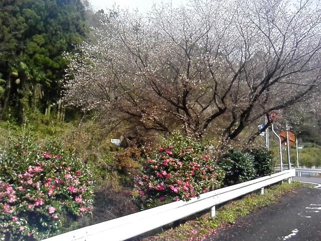 f:id:miyoshi_s:20181217120828j:plain