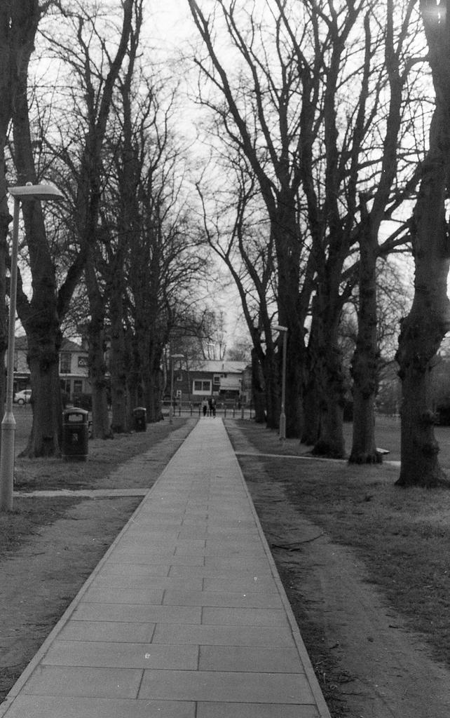 通学路の並木道