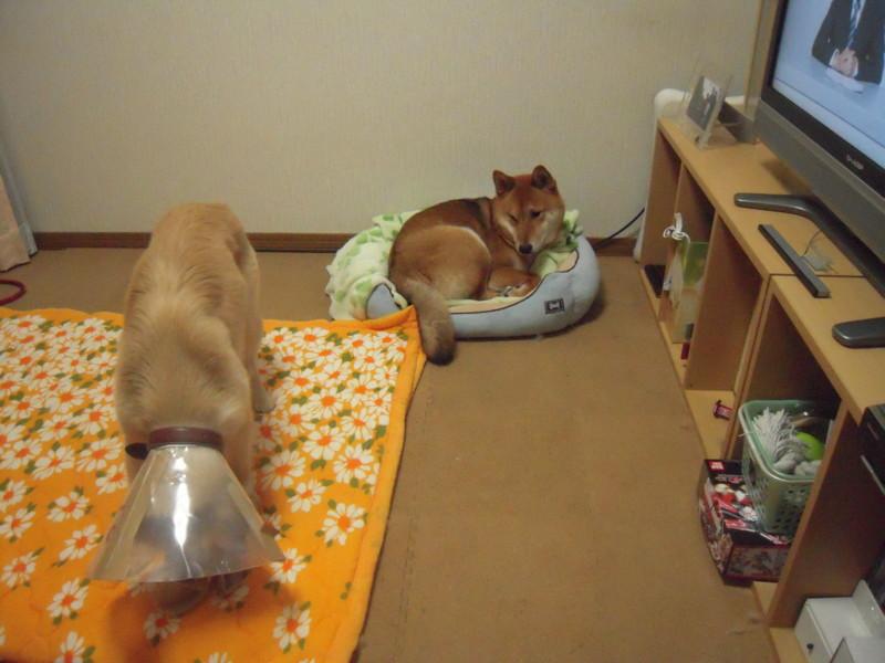 f:id:miyuki04:20100306212035j:image:w400