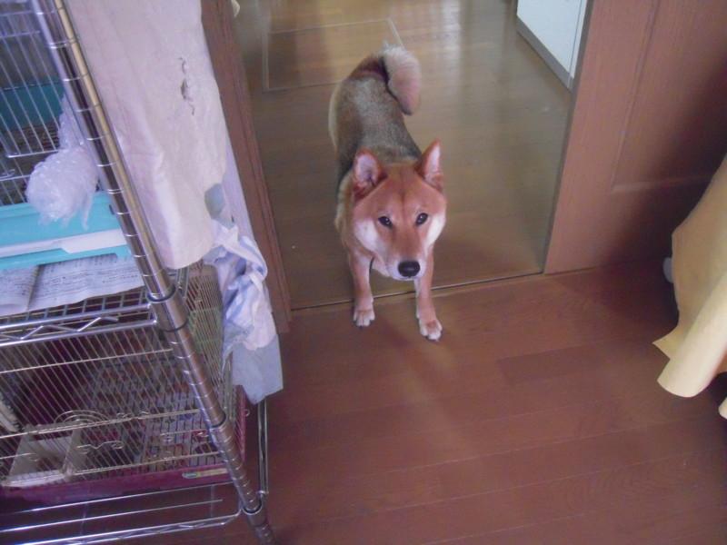 f:id:miyuki04:20100329082527j:image:w400
